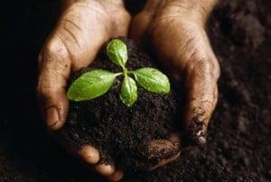 Beneficios-de-la-jardinera-en-la-salud-00
